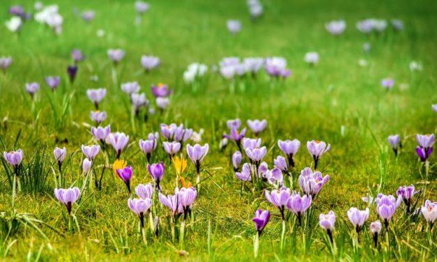 Samorząd uczniowski zaprasza naPowitanie Wiosny