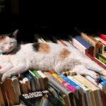 Zapraszamy nakiermasz książek wbibliotece